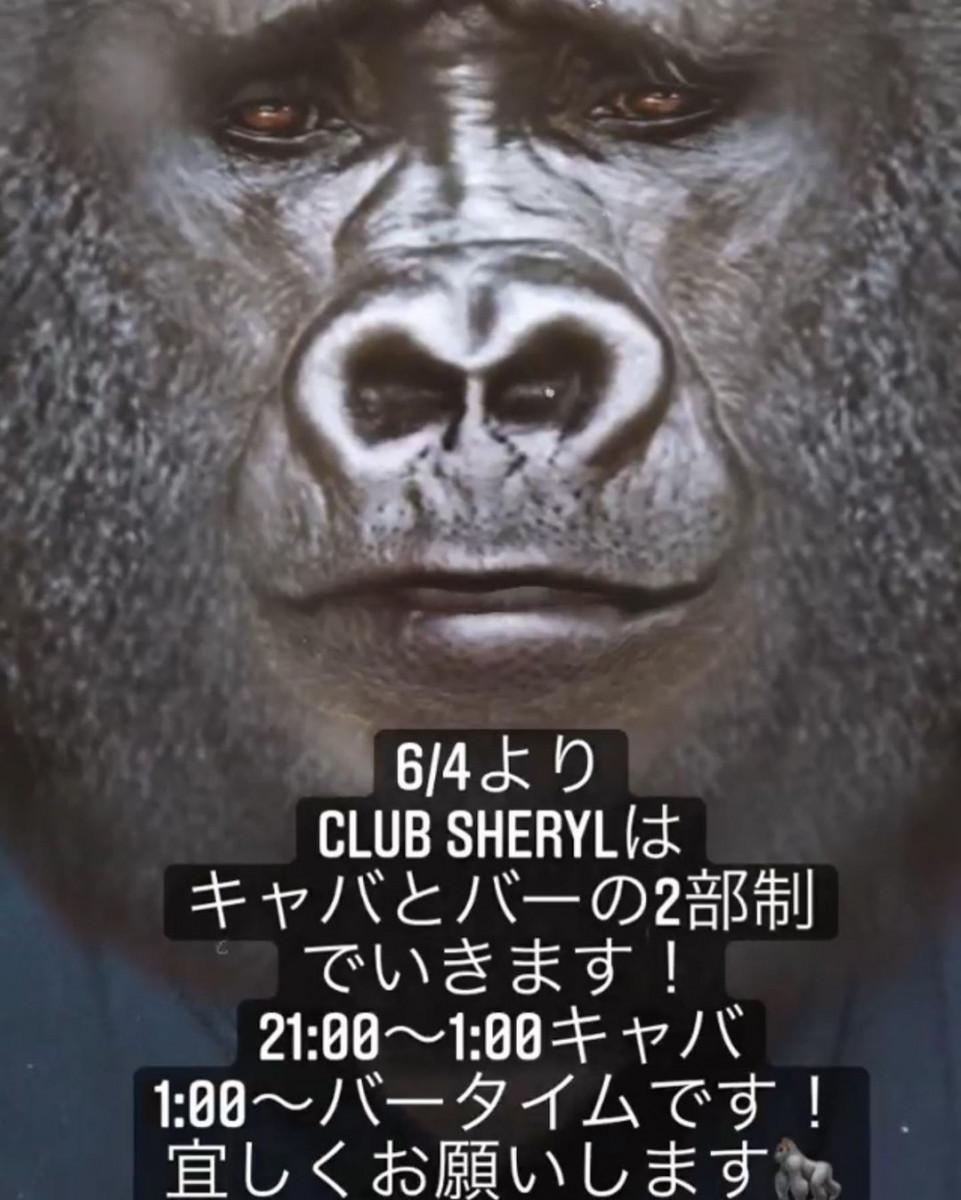 SHERYLホットニュース11489
